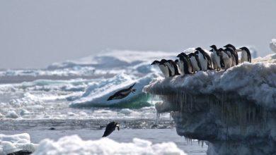 Photo of Verrassing van formaat: 1,5 miljoen pinguïns ontdekt op eilandjes Zuidpool