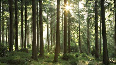 Photo of Dit is de volgende trend uit Japan Shinrin-Yoku oftewel 'bosbaden'