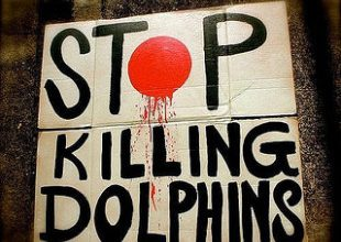 Photo of Hoe Frankrijk dolfijnen uitroeit