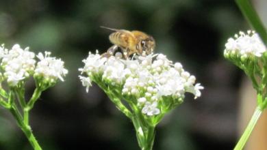 Photo of Er komen voedselbanken voor noodlijdende bijen