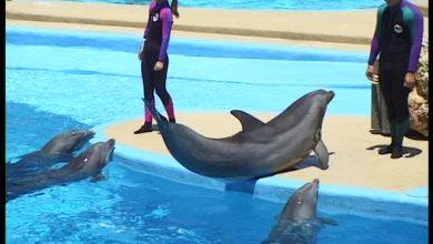Photo of Zwemmen met dolfijnen, nee bedankt