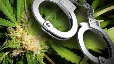 Photo of Waarom is Cannabis eigenlijk illegaal?