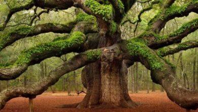 Photo of Bomen hebben ook een hartslag!