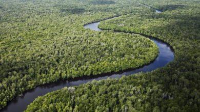 Photo of Houtkappers in Amazonewoud vervalsen documenten