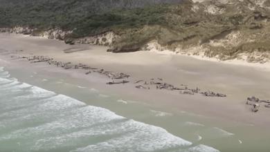 Photo of Walvissen en dolfijnen sterven massaal door het gebruik van sonar