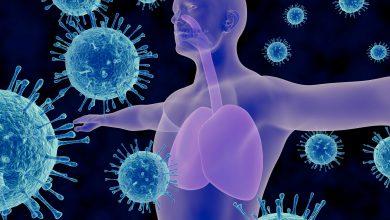 Photo of De kracht van het immuunsysteem